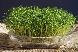 Rzeżucha – cenne źródło witamin i mikroelementów