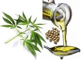 Jakie właściwości ma olej konopny?