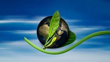 Inicjatywy ekologiczne – Medsowa