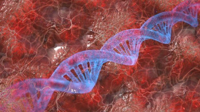 Nukleotydy odgrywają ważną rolę w regeneracji i tworzeniu się nowych komórek