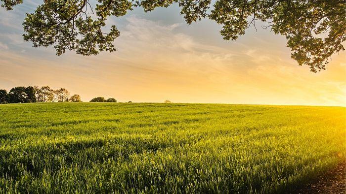 świeże, lokalne produkty są najzdrowsze i najbardziej wartościowe