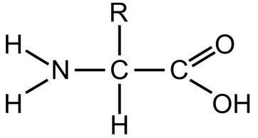 Aminokwasy — ranking najlepszych produktów