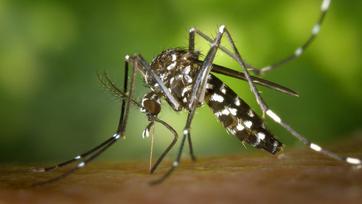 Komary – ranking najlepszych produktów